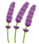 lavandin