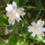 id:lavendersan