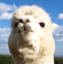 lawyer_alpaca