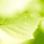 leaf_happy_simplelife
