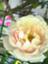 id:lennyu_0029