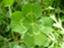 limegreen-frog