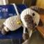 linda_morey