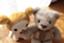 id:little_dipper