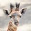 id:longneck_giraffe0