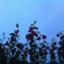 id:louise_pot