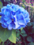 id:loveDorothy