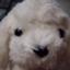 id:lucyukan
