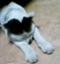 id:lunatycat
