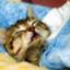 id:ma_yu_mi_net