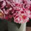 id:maccaroni_m