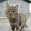 id:macskak