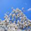 magnolia0219