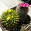 mainichi_nails