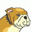 malibu-bulldog