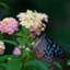 id:mame90