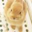 id:mamekousagi