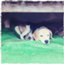 id:manbo_cho