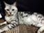 mar1_kitty