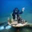 marinelifelog