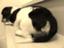 id:marono_oshiri