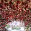 id:maruakurose