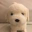 id:masahiroblogaffiliate