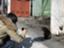 masako_y