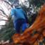 matt_coco