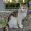 id:may-cat