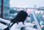 id:meetmeet1231