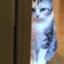 id:meguru1844