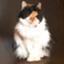 id:meichancat
