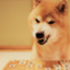 id:mhirokin