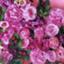 id:mieko-chan