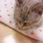 id:mikatakun