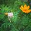 id:mikomiko_398