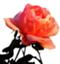 id:milkcrown