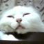 id:mimishiro