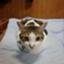 id:minekofujiko