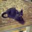 id:mint0606