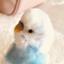 id:misachu0925