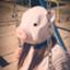 misaton_sedori