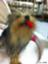 id:misuzu-karu