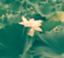 id:mitsuko-IL02