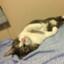 mizhiro