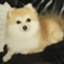 mizutama_pafe
