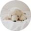 mochi_shiro