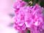 id:moco_moko_hitsuji
