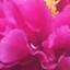 id:moistbeauty
